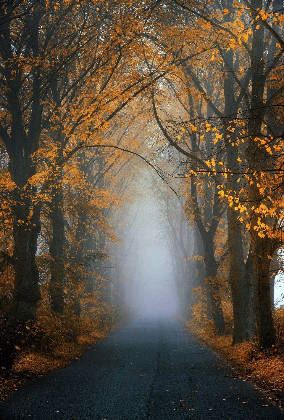 foggy road trees yellow blue leafs path misty magic autumn fall, Radoslaw Dranikowski