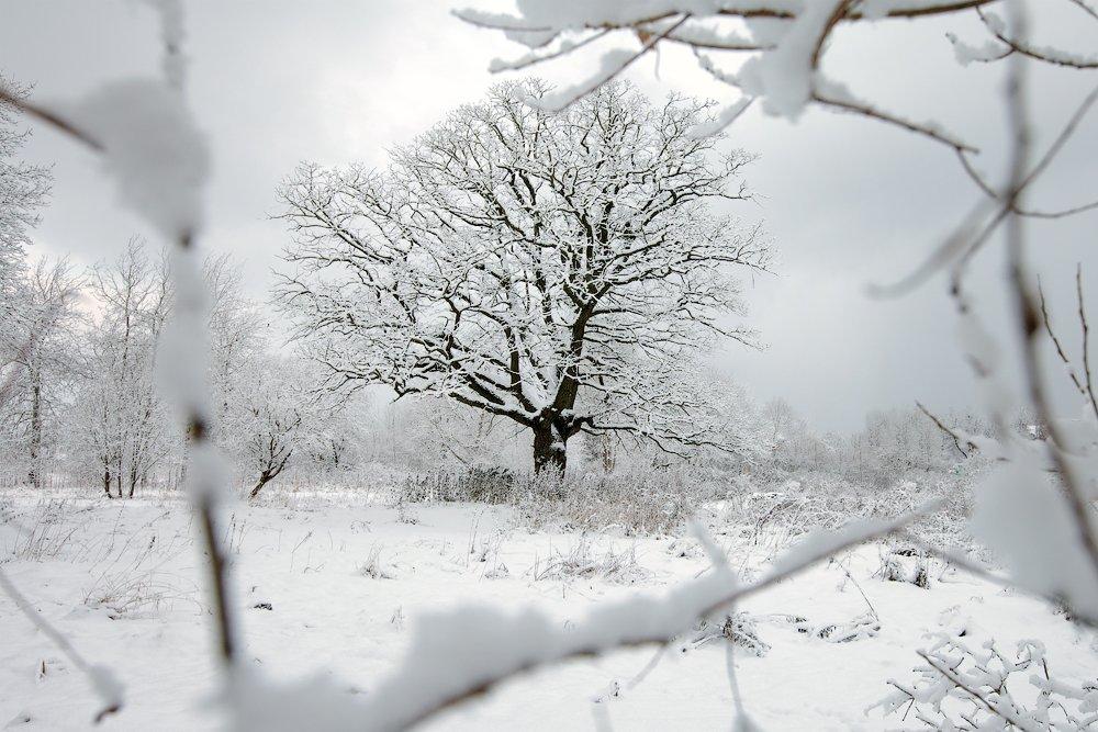 зима, пейзаж, окошко, Aleksandr Kljuchenkow