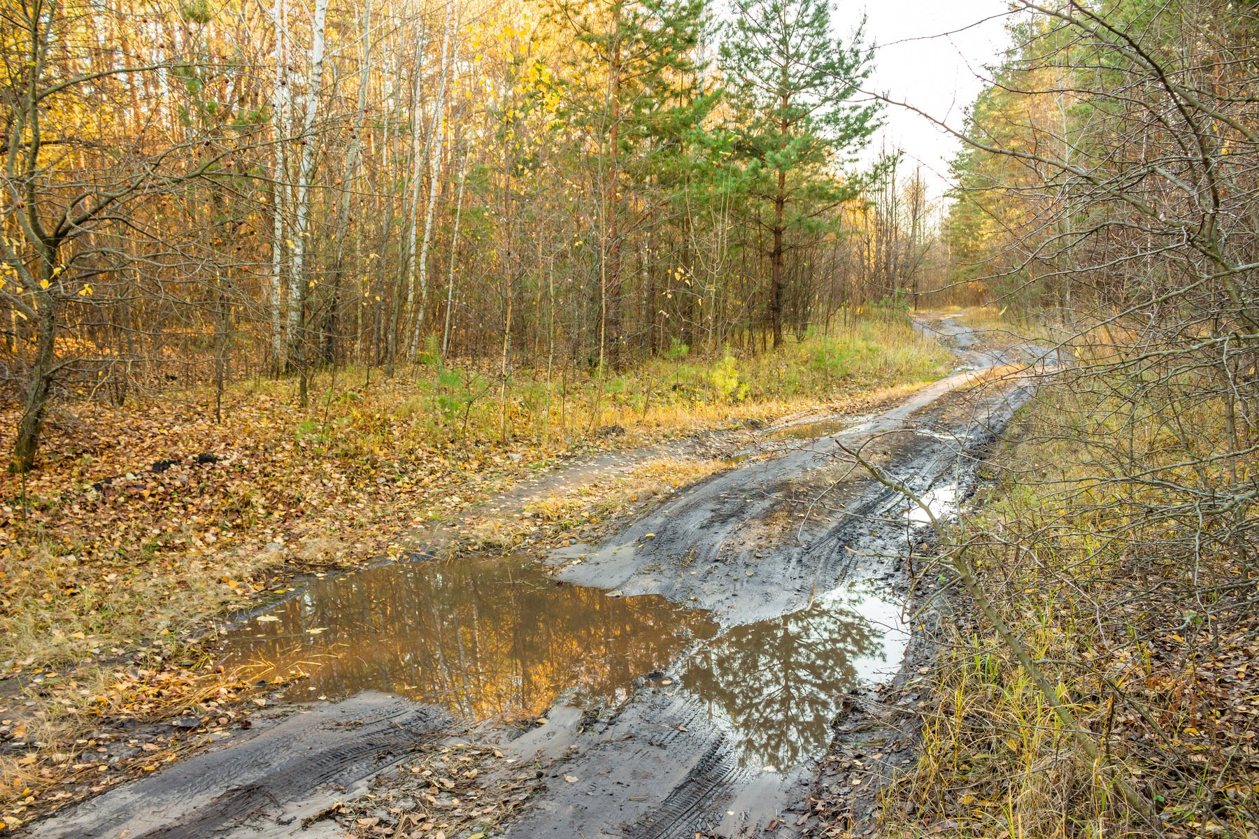 осень, октябрь, лужи, лес, заповедник, дорога, грязь, Руслан Востриков