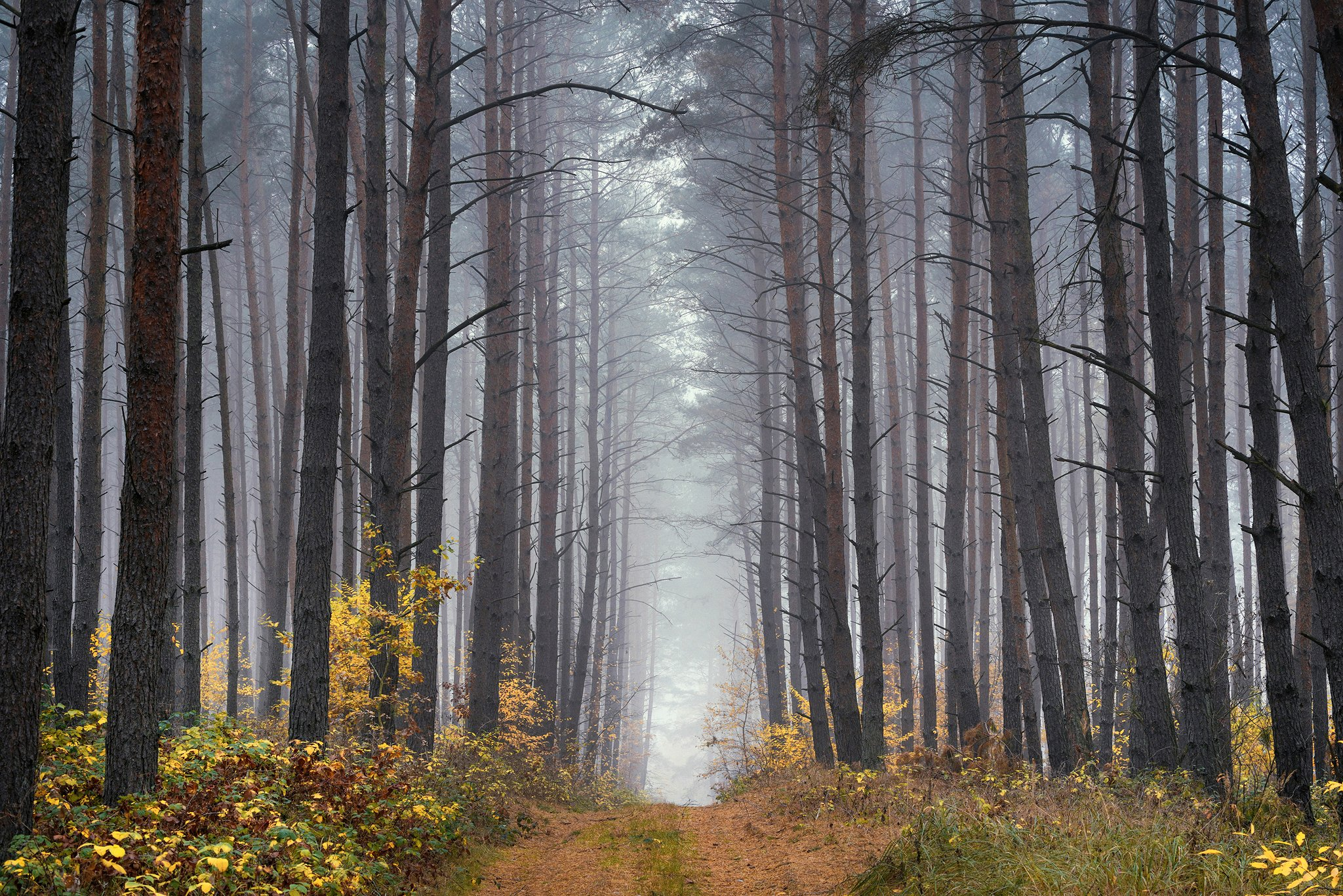 uphill in the forest tree trees magic mist foggy morning path road dranikowski fog autumn fall, Radoslaw Dranikowski
