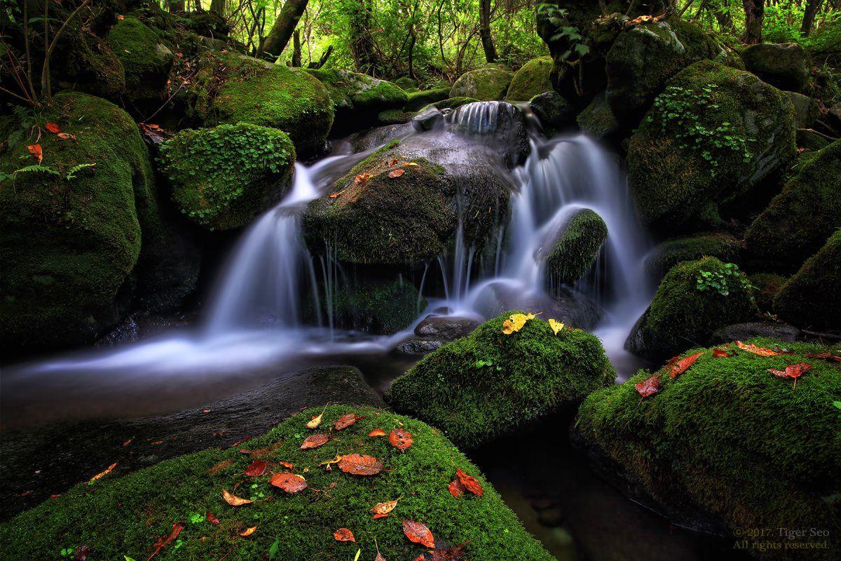 waterfall water moss flow stream green valley Korea landscape, Tiger Seo