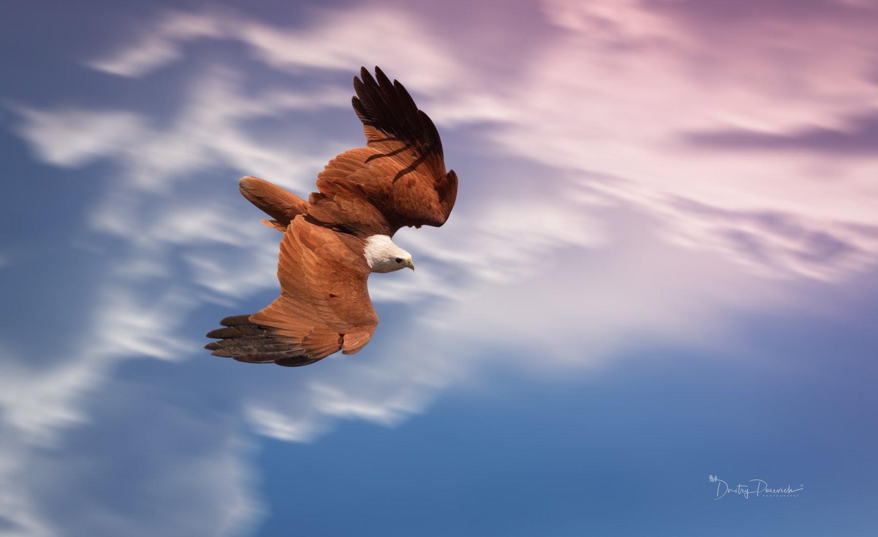 природа, животные, птицы, вьетнам, остров фукок, Дмитрий Посевич