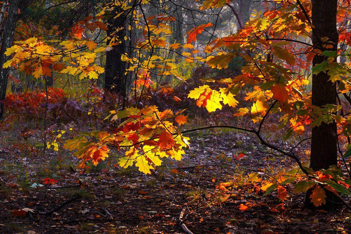 Осенние краски. Шерман Михаил
