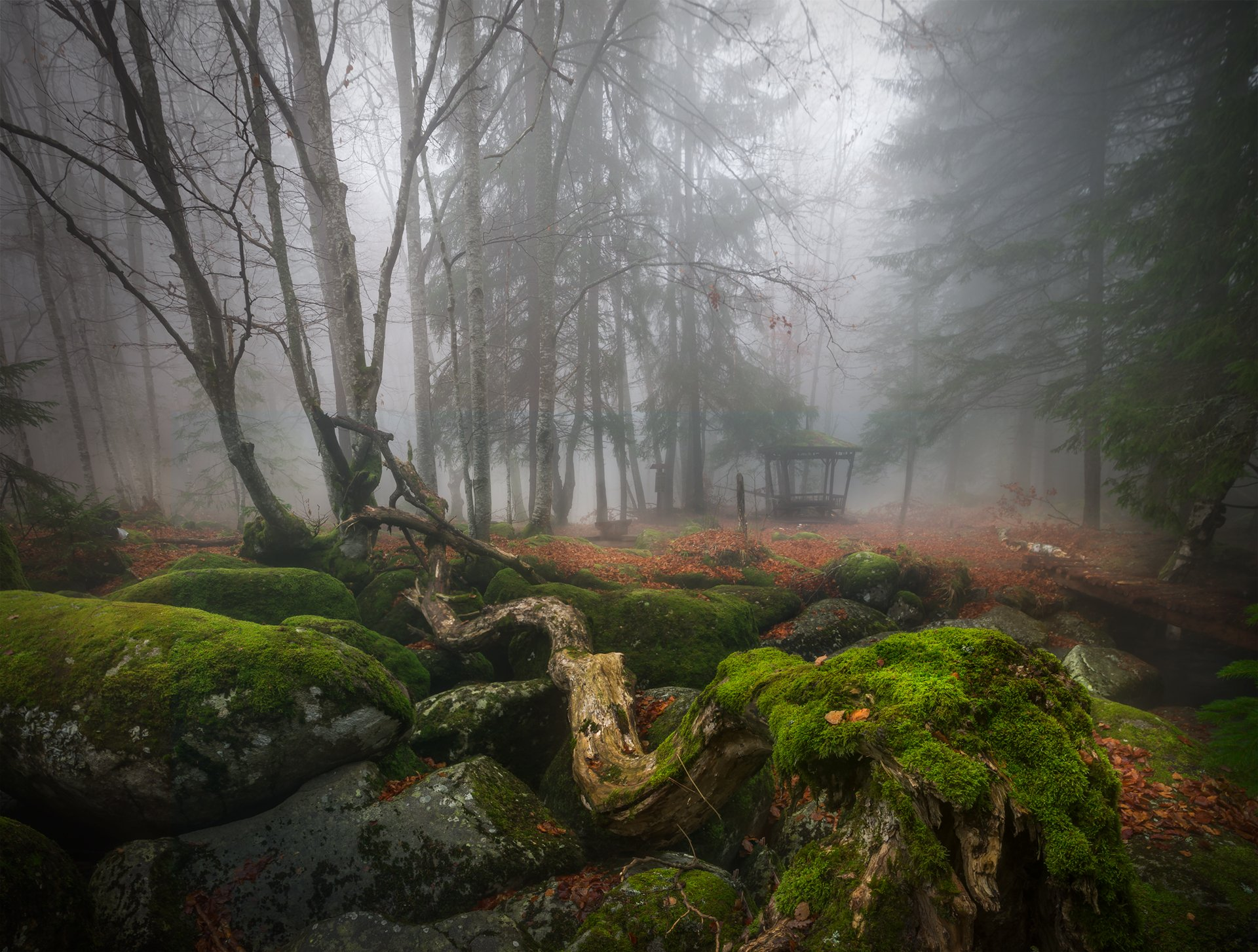 landscape nature scenery forest wood autumn mist misty fog foggy river longexposure mountain rocks vitosha bulgaria туман лес oсень, Александър Александров