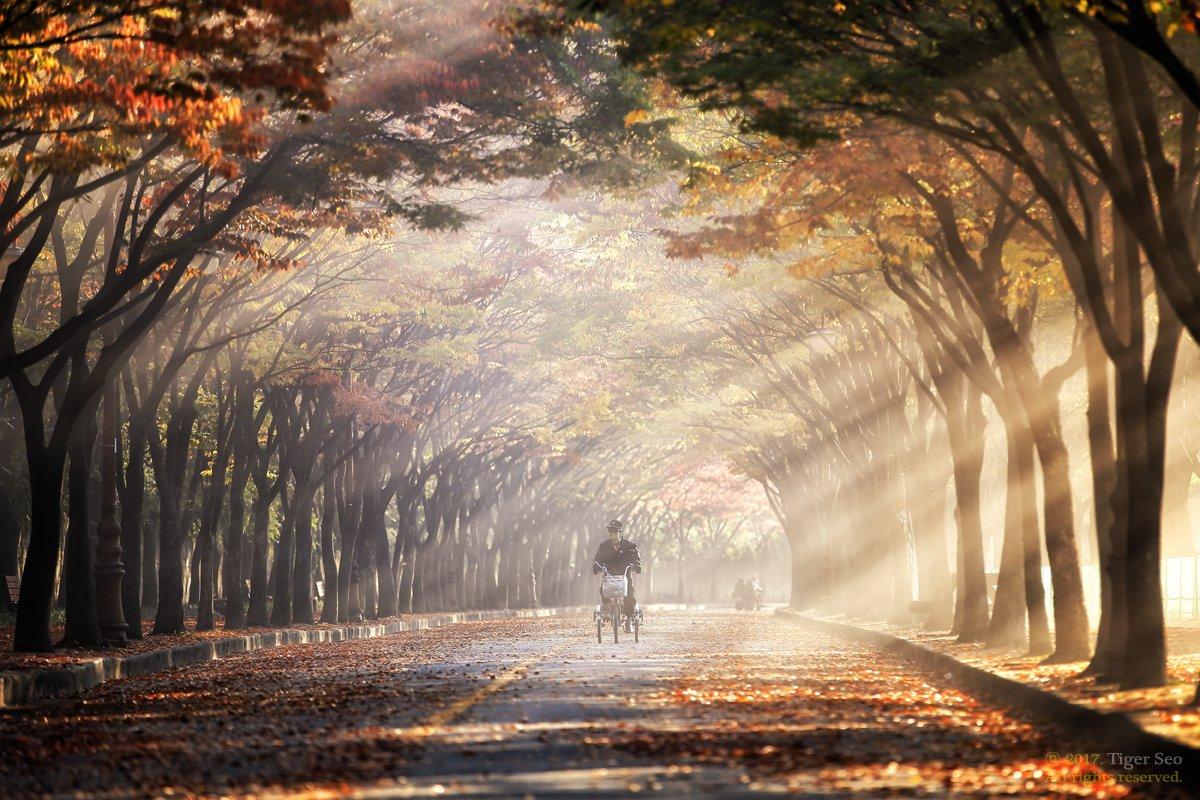 rays morning trees rider landscape travel light sunrise Korea, Tiger Seo