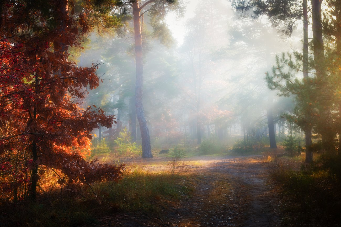 лес, осень, ноябрь, туман, белый, лучи, рассвет, Галанзовская Оксана