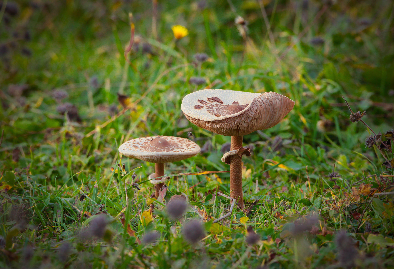 грибы,гриб,зонтик, Марат Магов