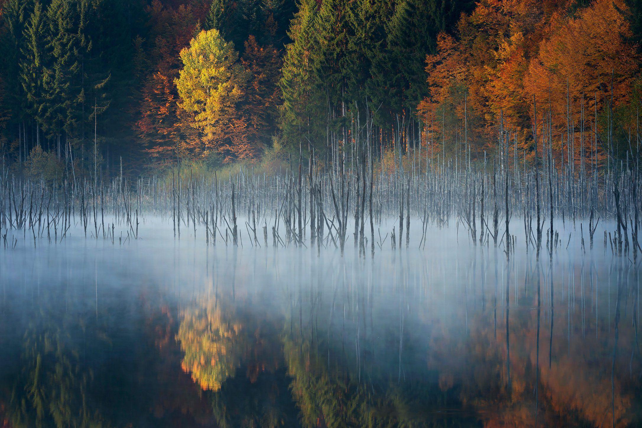 forest, trees, autumn, fog, landscape, travel, nature, mountain ,romania, lake, colors, sunrise, reflection, Lazar Ioan Ovidiu