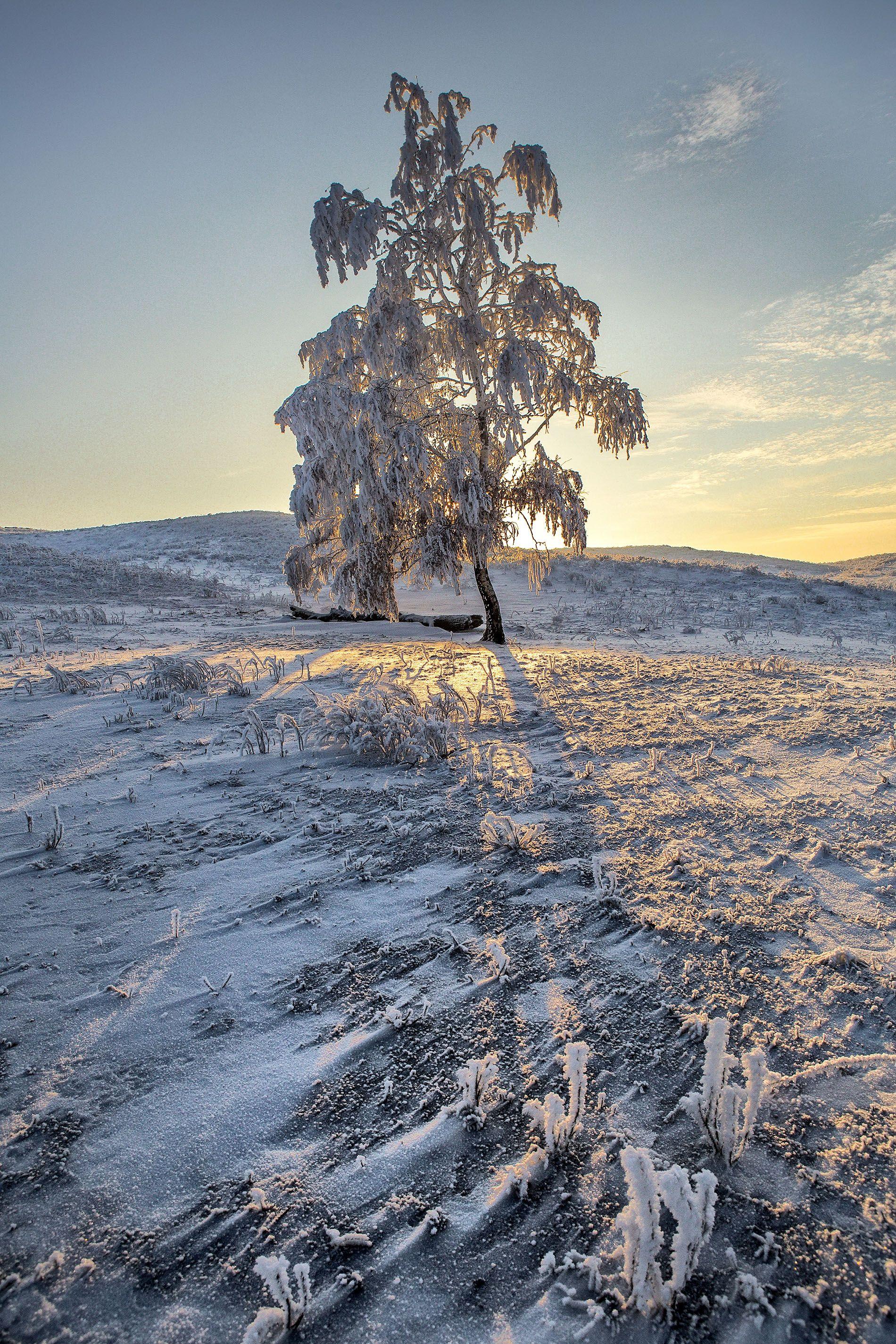 зима иней изморось дерево закат фактура снег, Качурин Алексей