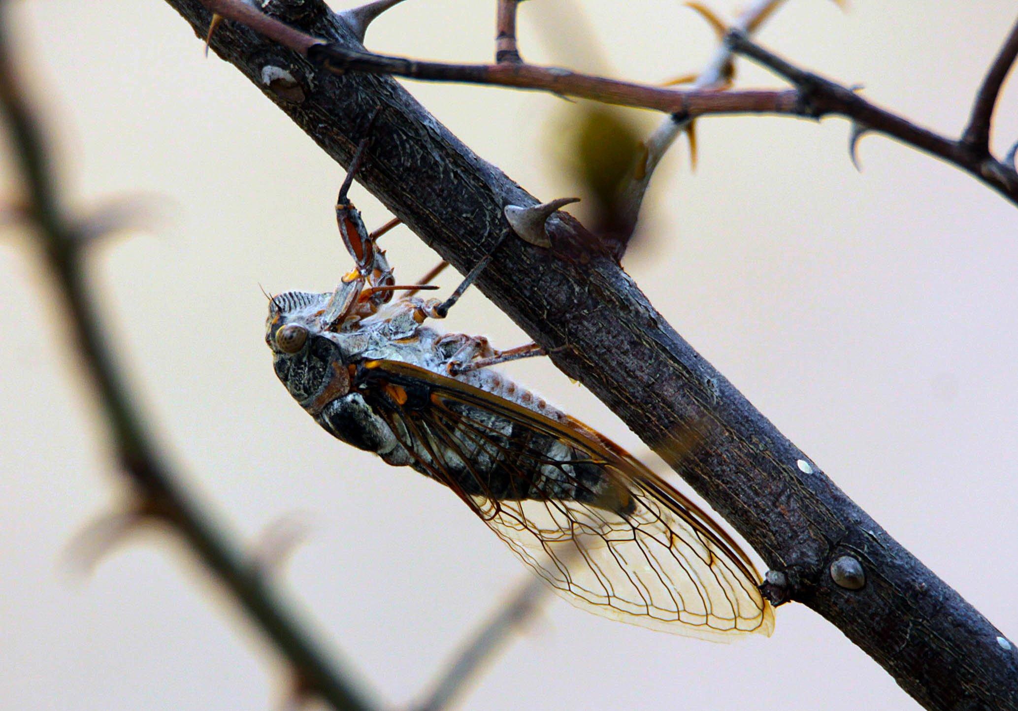 насекомая,природа,макро, Марат Магов