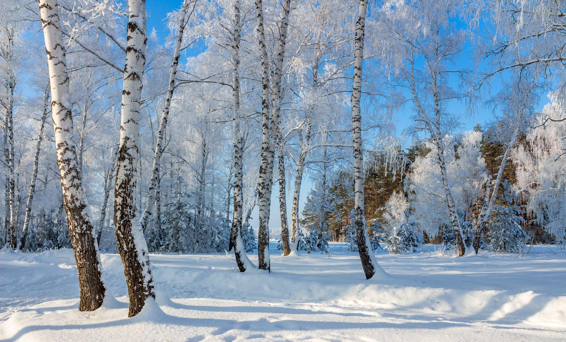 усмань, снег, мороз, лес, зима, заповедник, берёзы, Руслан Востриков