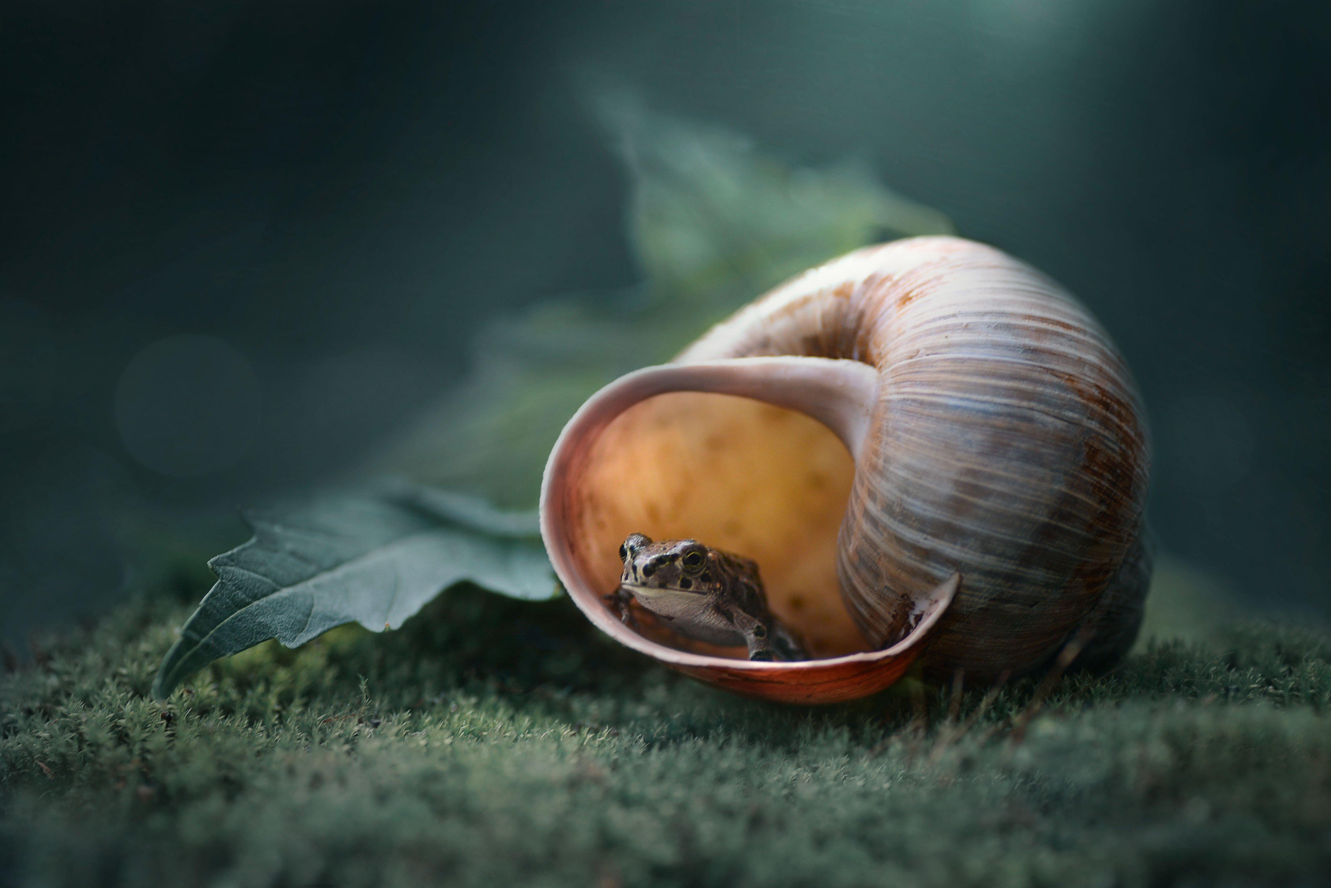 лягушка, ракушка, макро, природа, зеленый лист, Чернобай Анна