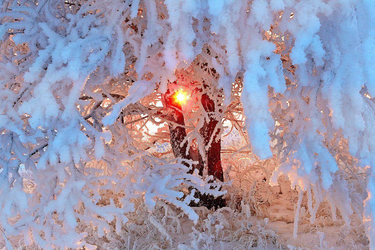 снег иней зима дерево, Качурин Алексей
