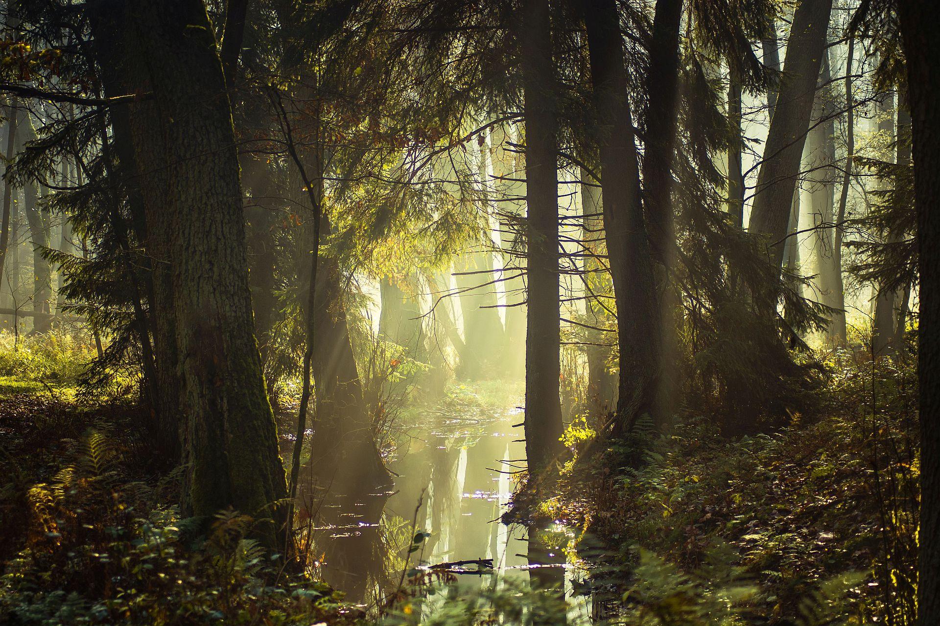 dawn,fog,trees,water,sky,light,landscape,nature,nikon,mist,forest,, Tollas Krzysztof