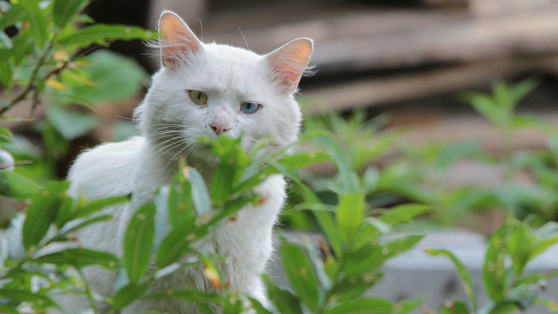 Кот, глаза, Картавцов Артем