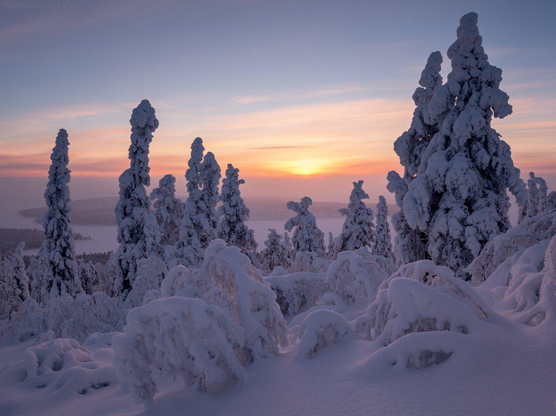 пейзаж,кольский,север,россия,лес,зима,цвет,солнце, Истомин Виталий