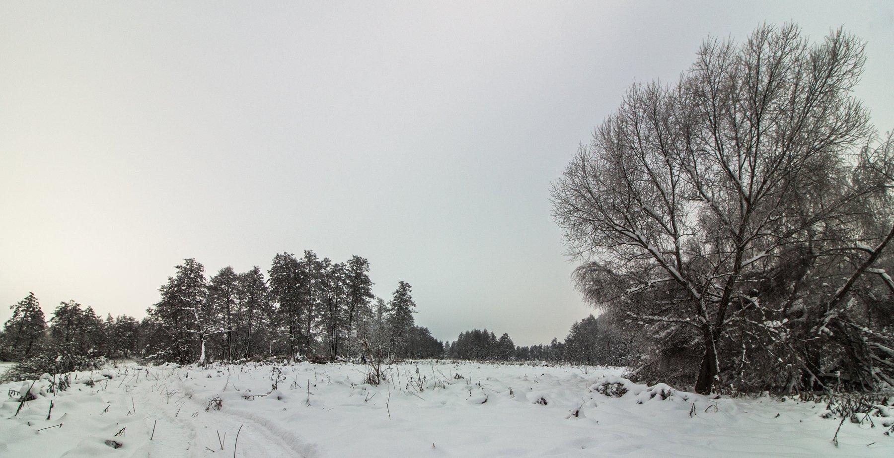 лес, зима, снег, деревья, Руслан Востриков