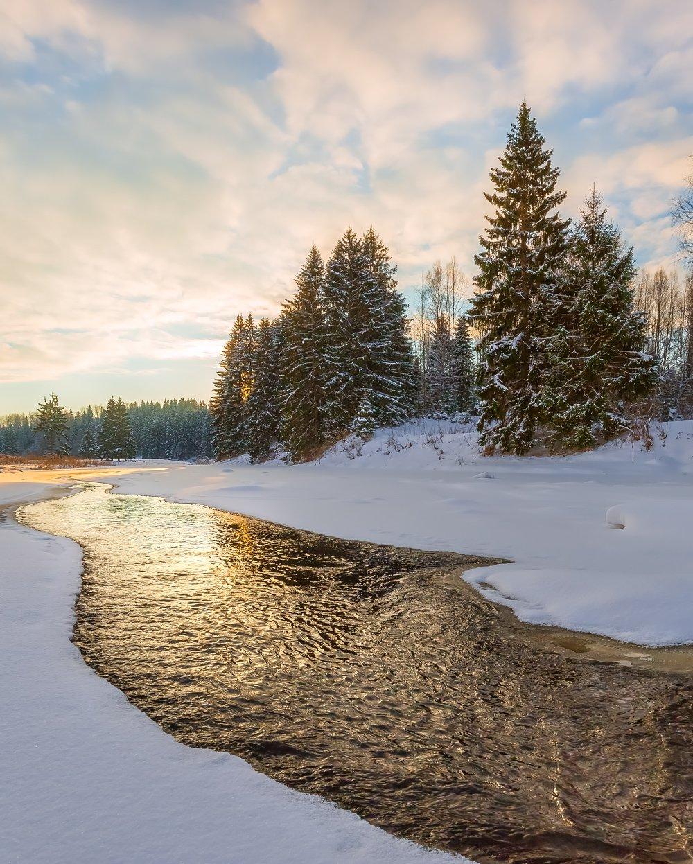 ленинградская область, деревья, зима, рассвет, река, облака, берег, вода, ель, лес, деревья,, Лашков Фёдор