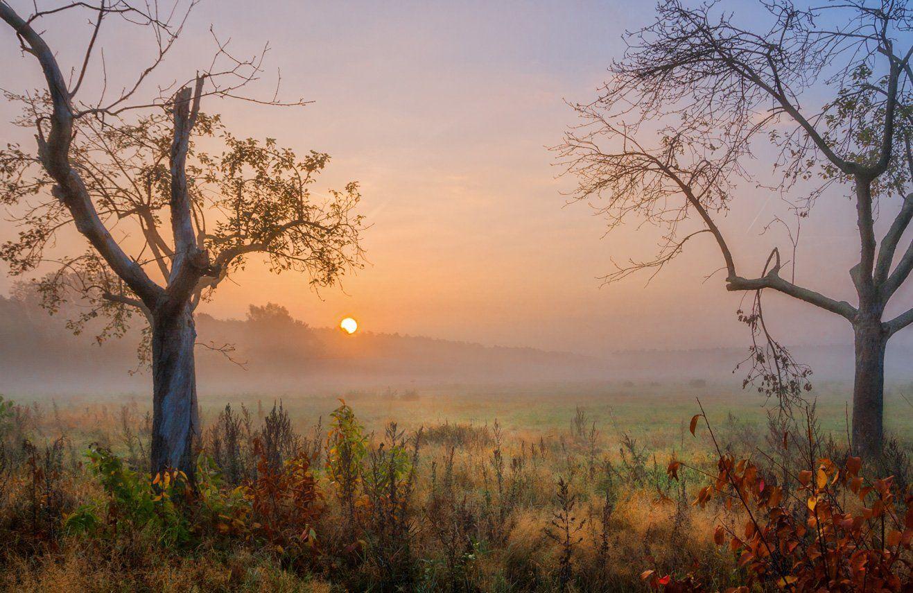 утро, восход, солнце, туман, осень, deutschland, rodgau, германия, Виктор Климкин