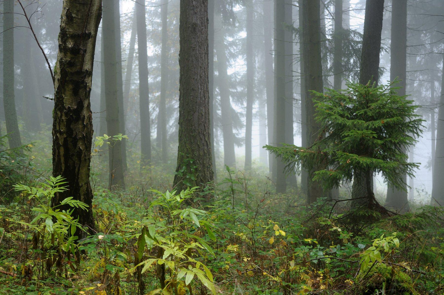 Autumn forest, Jiri Kuchar