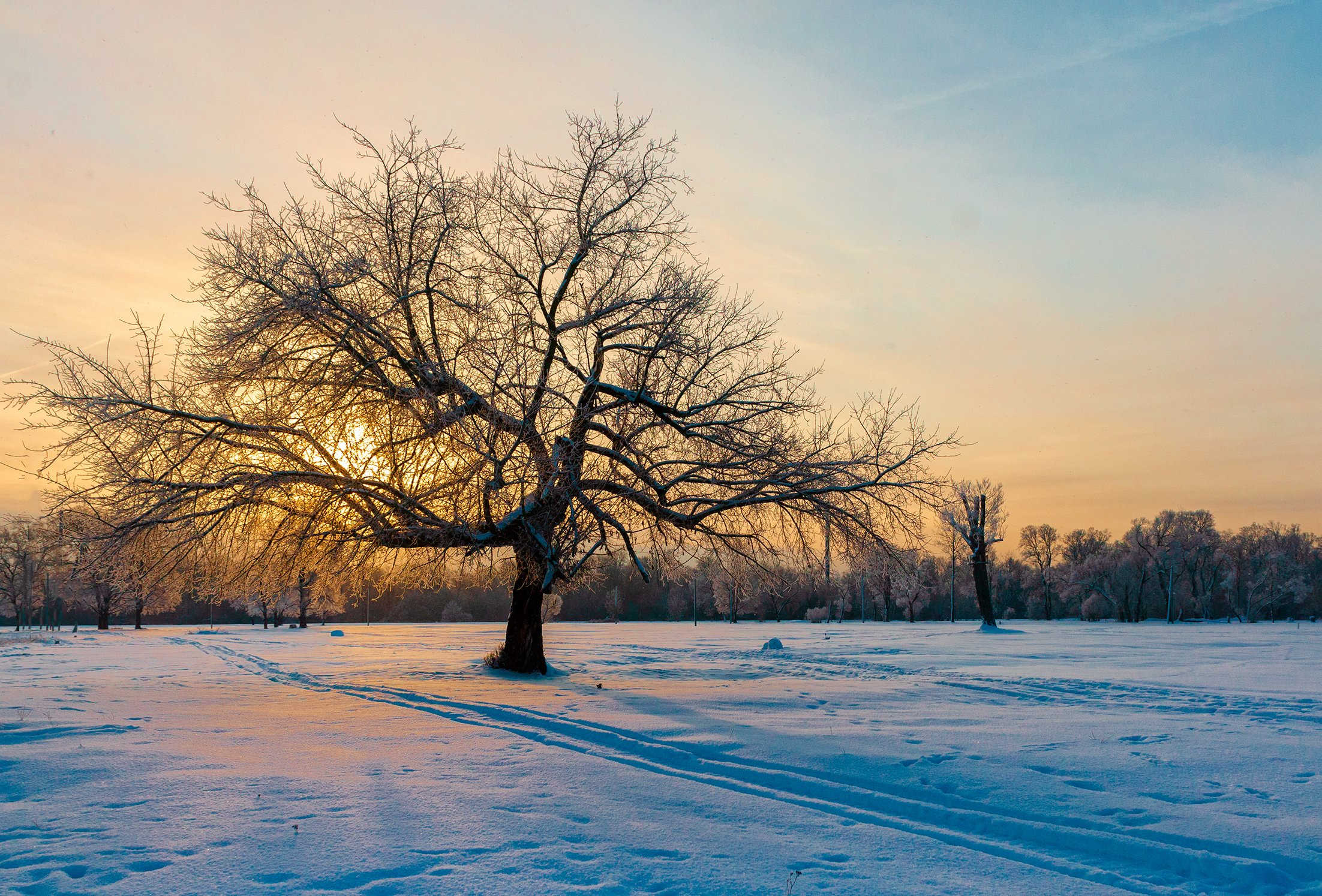 nevant60, пейзаж, красота, андреевский луг, утро, мороз, Александр Березуцкий