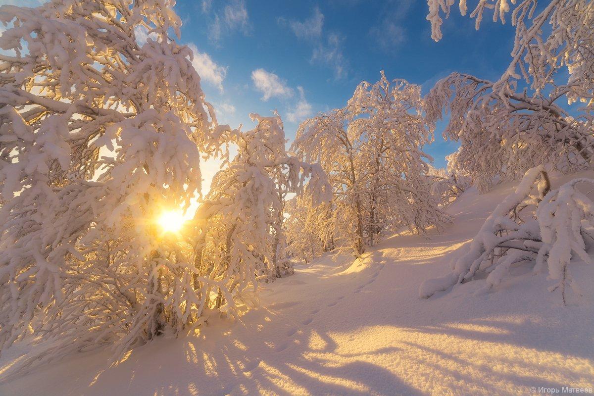 солнце,снег,сугробы,лес,зима,мороз,, Матвеев Игорь