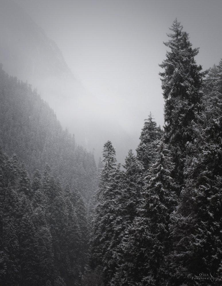 домбай, кчр, карачаево-черкессия, кавказ, снег, снегопад, горы, туман, зима, зимняя сказка, дымка, чб, Ольга Потапова