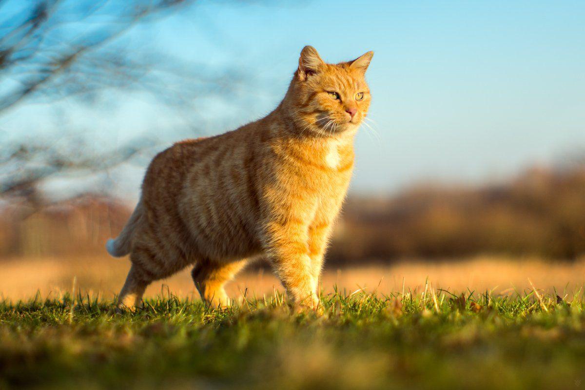 cat, golden hour, freedom, Wojciech Grzanka