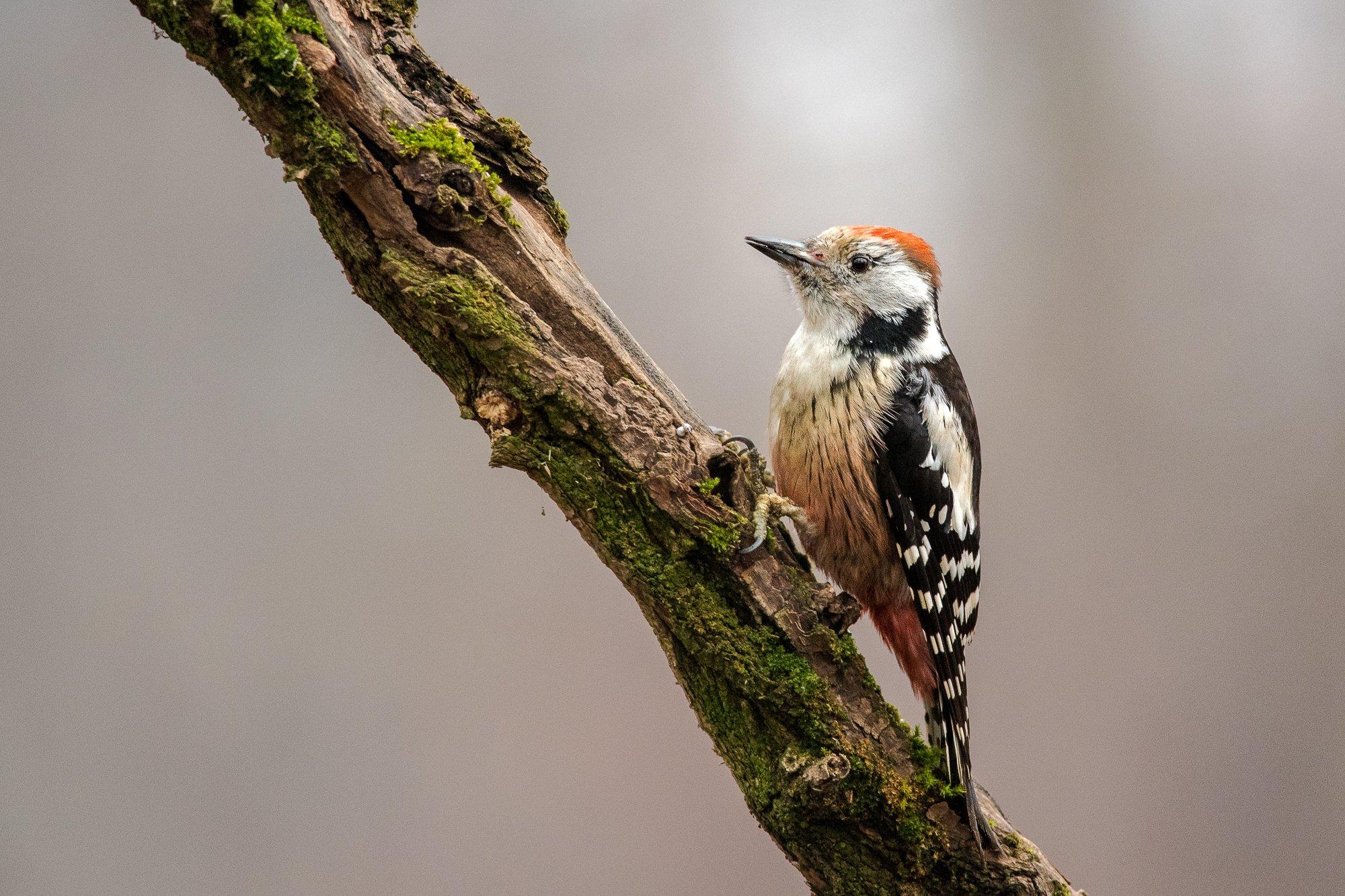 #wood #young # alone # forest, #tree #woodcreeper # background #nature #wild #wildlife, Nikolay Nikolov