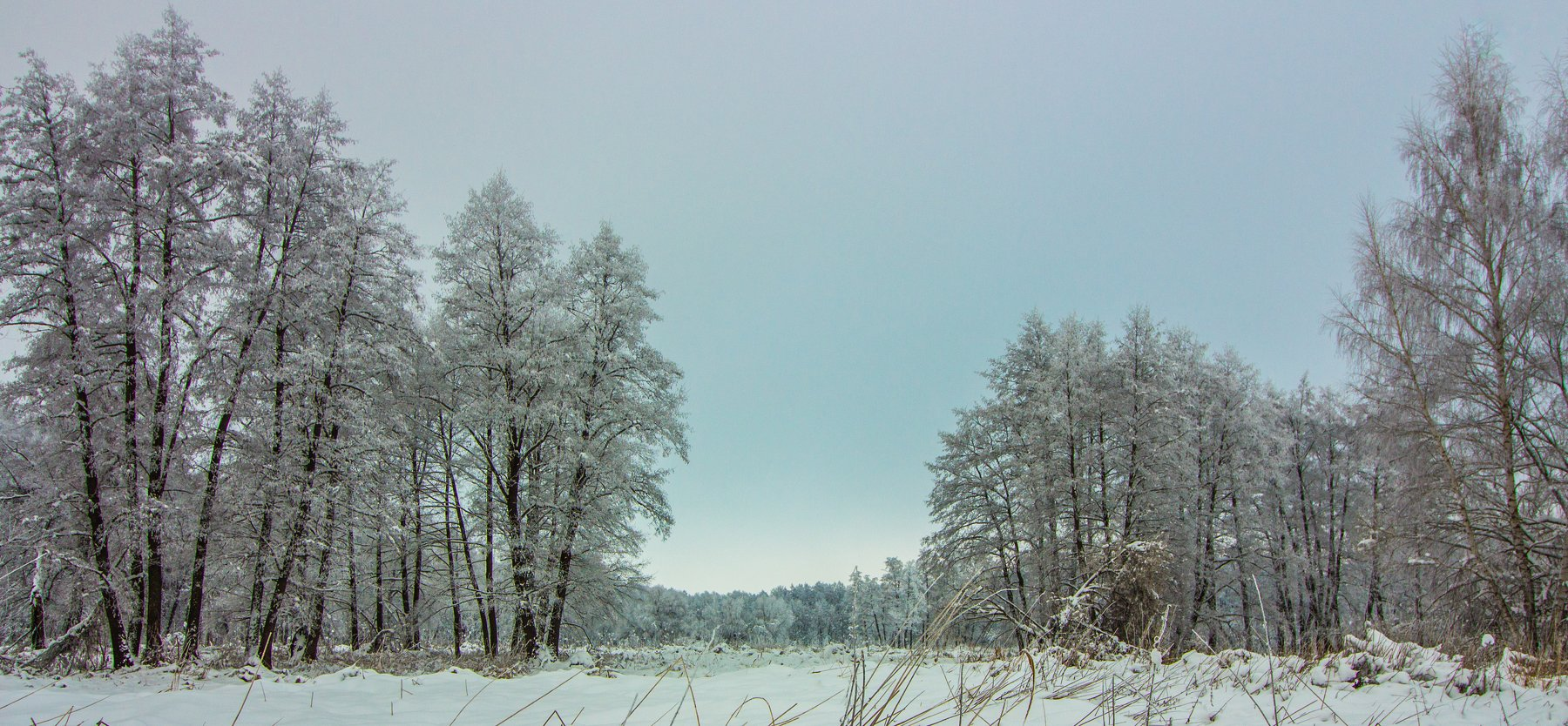 лес, зима, снег, Руслан Востриков