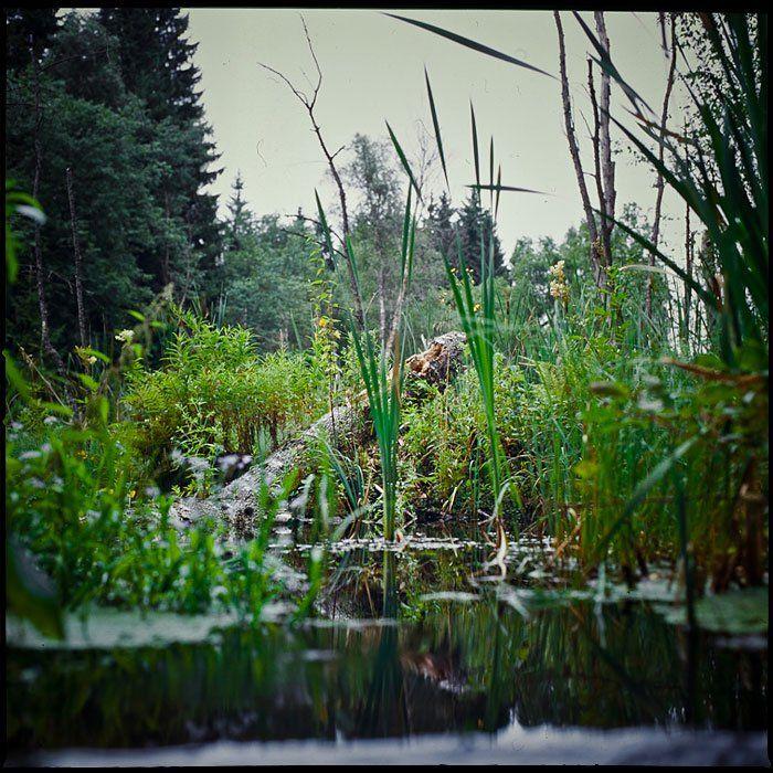 болото, природа, вода, лес, Serge Kovchenkov