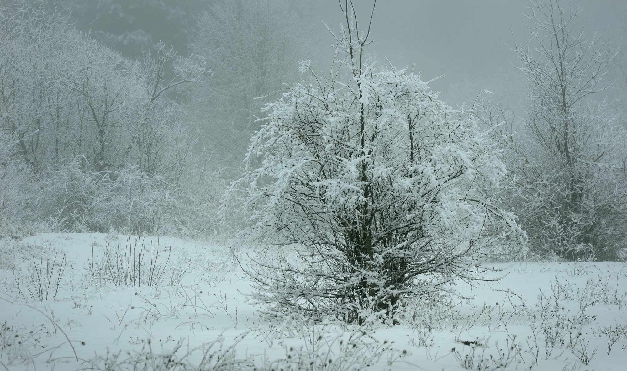 зима лес снег утро, Александр Жарников