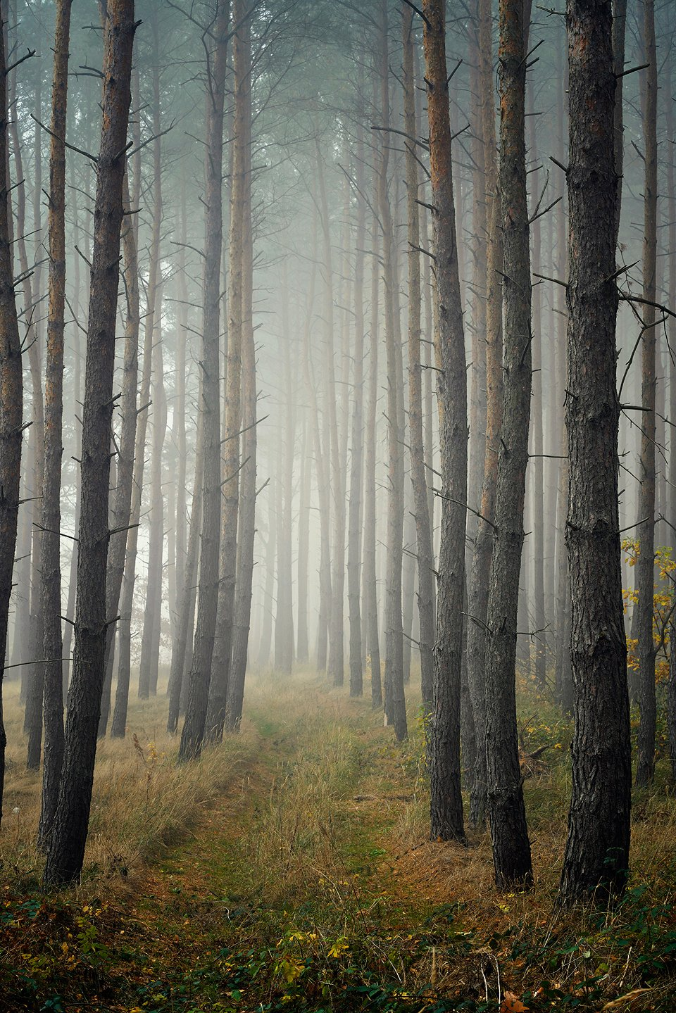 лесная дорога forest road fall autumn trees path dranikowski foggy mist magic, Radoslaw Dranikowski