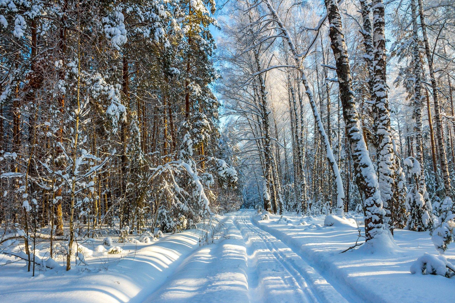усмань, снег, мороз, лыжня, лес, зима, заповедник, берёзы, Руслан Востриков