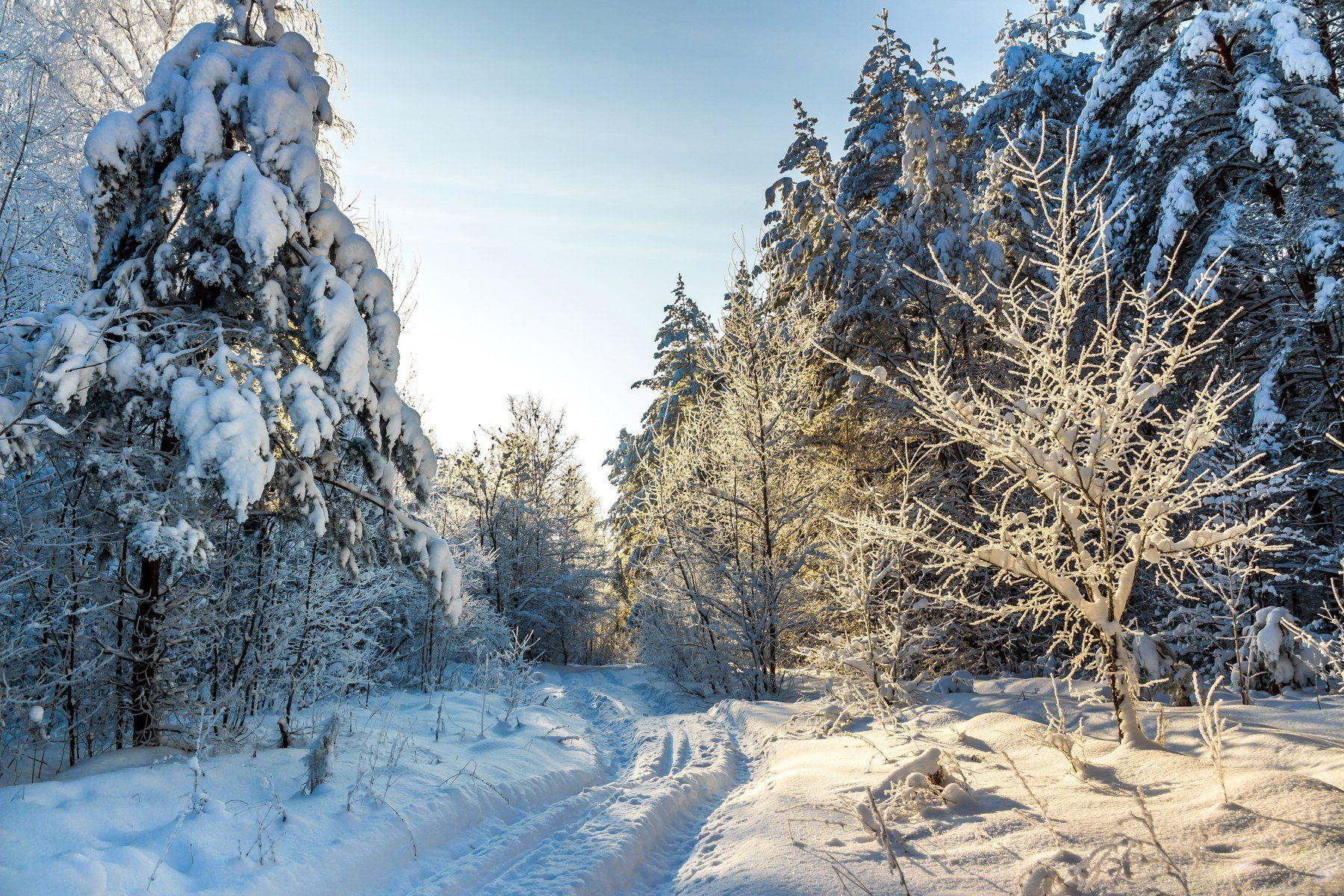 лес, зима, иней, мороз, рождество, снег, берёзы, сосны, заповедник, усмань, лыжня, Руслан Востриков