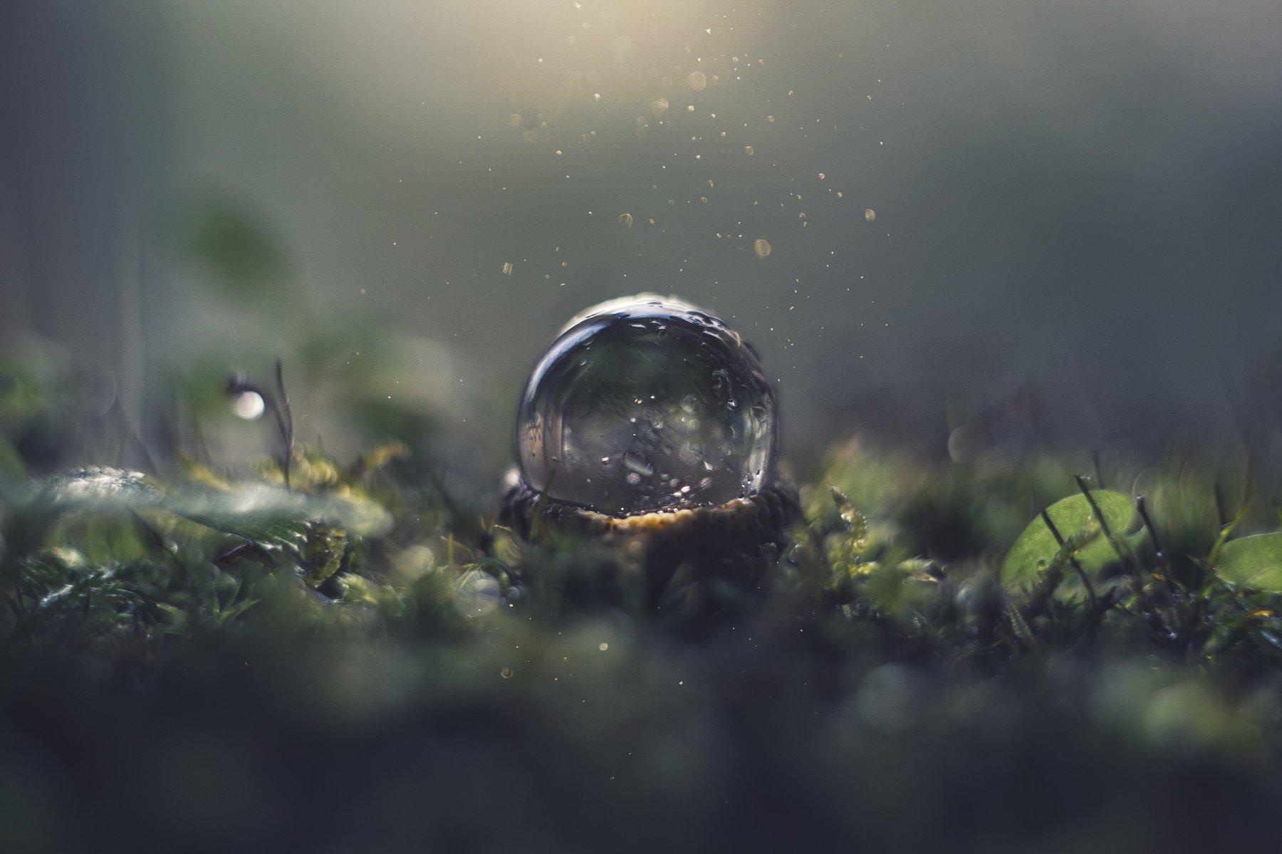 макро, макрофотография, макросъёмка, мох, лес, природа, капли, Орлова Ксения