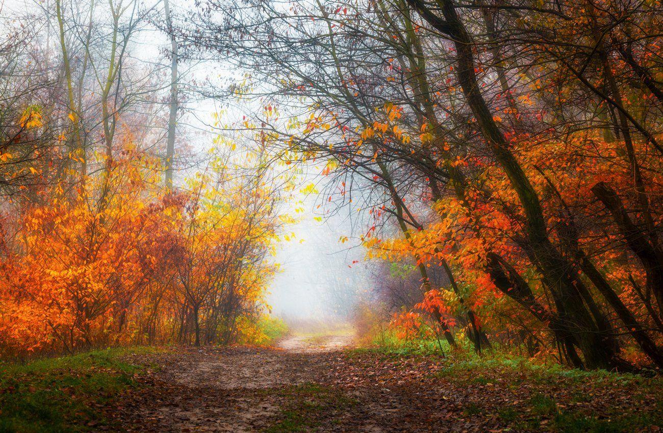 лес, осень, ноябрь, туман, белый, Галанзовская Оксана