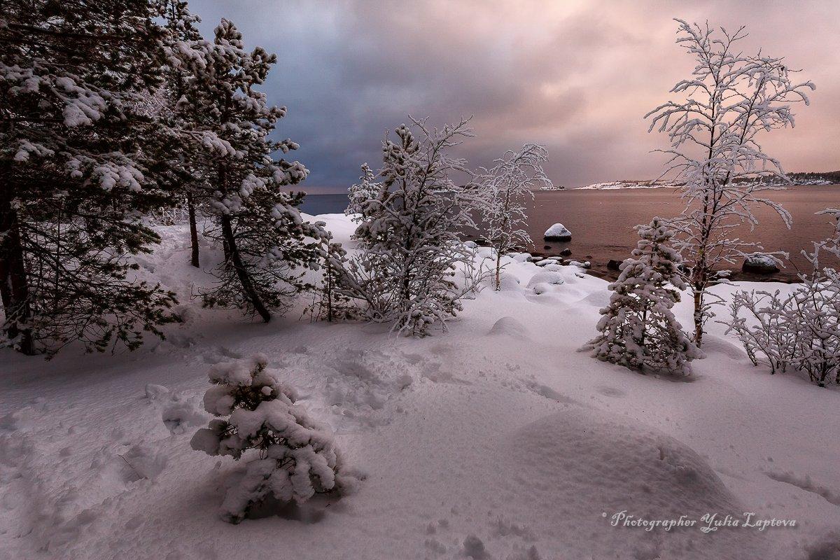 пейзаж,зима,природа,карелия,сосны,красота,декабрь, Юлия Лаптева