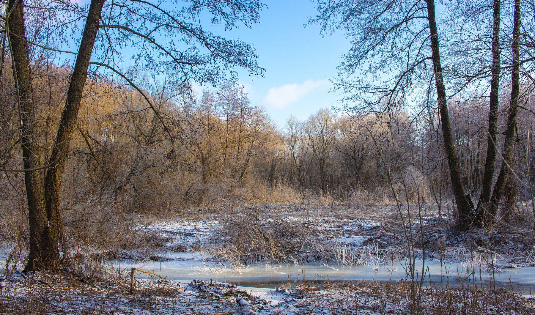 лес, зима, предзимье,мороз, ручей, река, усмань, Руслан Востриков