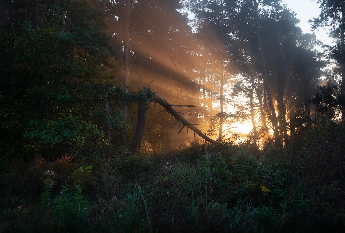 рассвет, осень, лес, дымка, свет,, Сергей Шабуневич