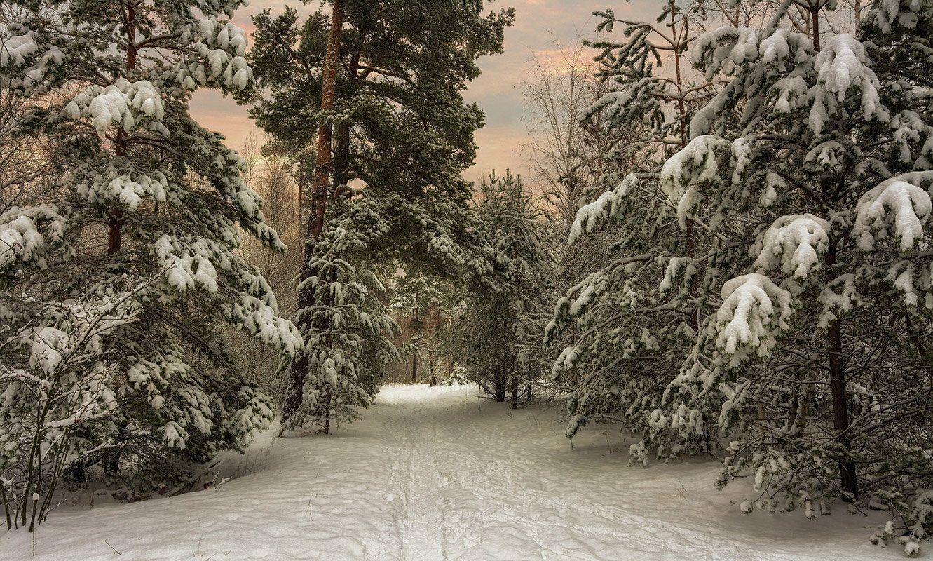 landscape, пейзаж,  лес,  деревья,  природа,     прогулка, зима,  снег, сугробы, сосны, тропа, заснеженный лес, заснеженные деревья, вечер, закат,, Шерман Михаил