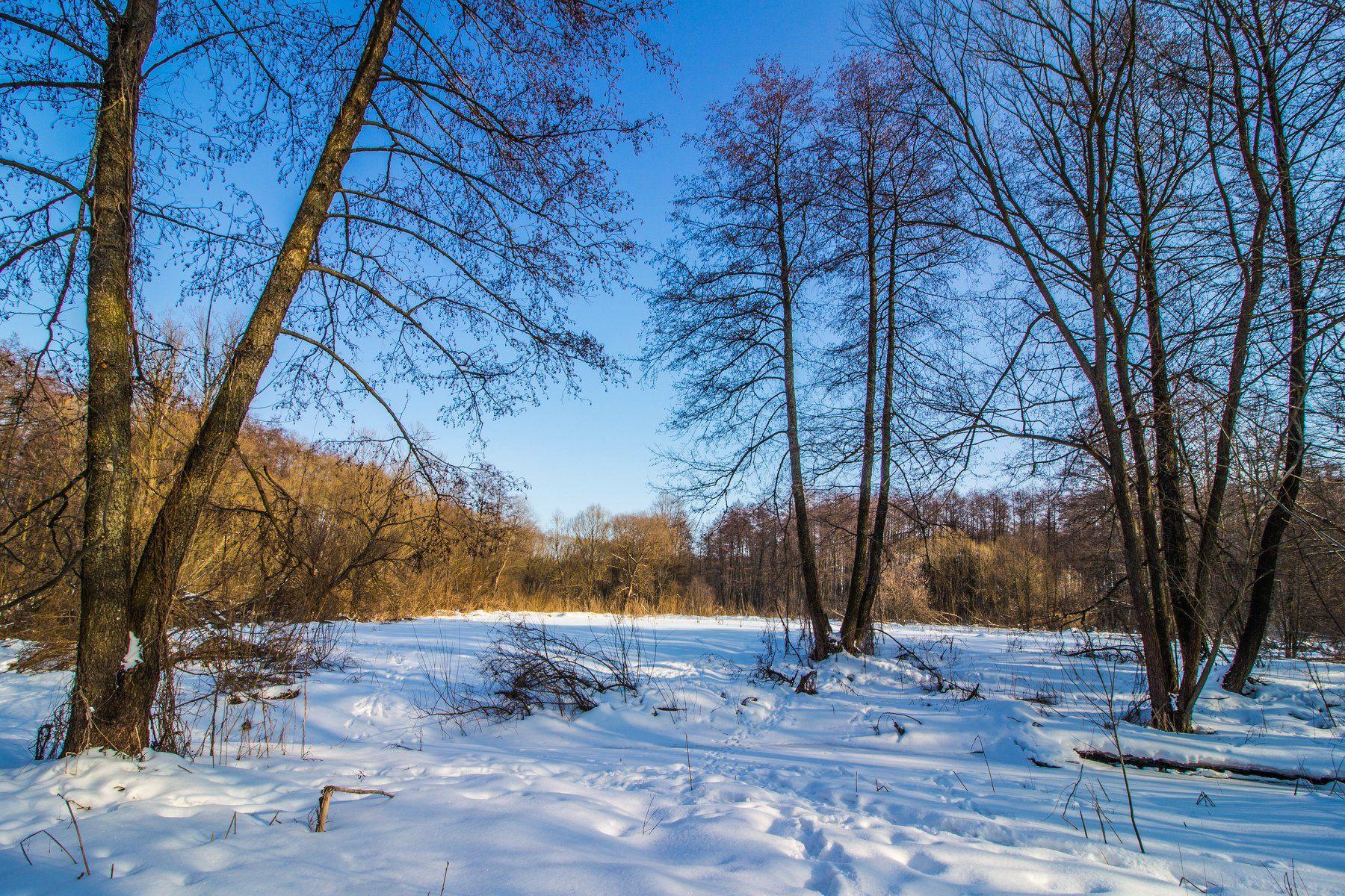 зима, лес, река, усмань, снег, Руслан Востриков