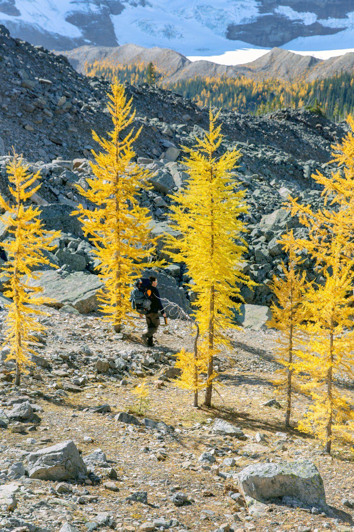 канада, альберта, банф, национальный парк банф, удивительная природа, исследуйте канаду, картины канадана, горные пики, гора hungabee, осень в канаде, сезон лиственницы, скалистые горы канады, парки канады, естественная красота, канадская фотография, дики, Marko Radovanovic