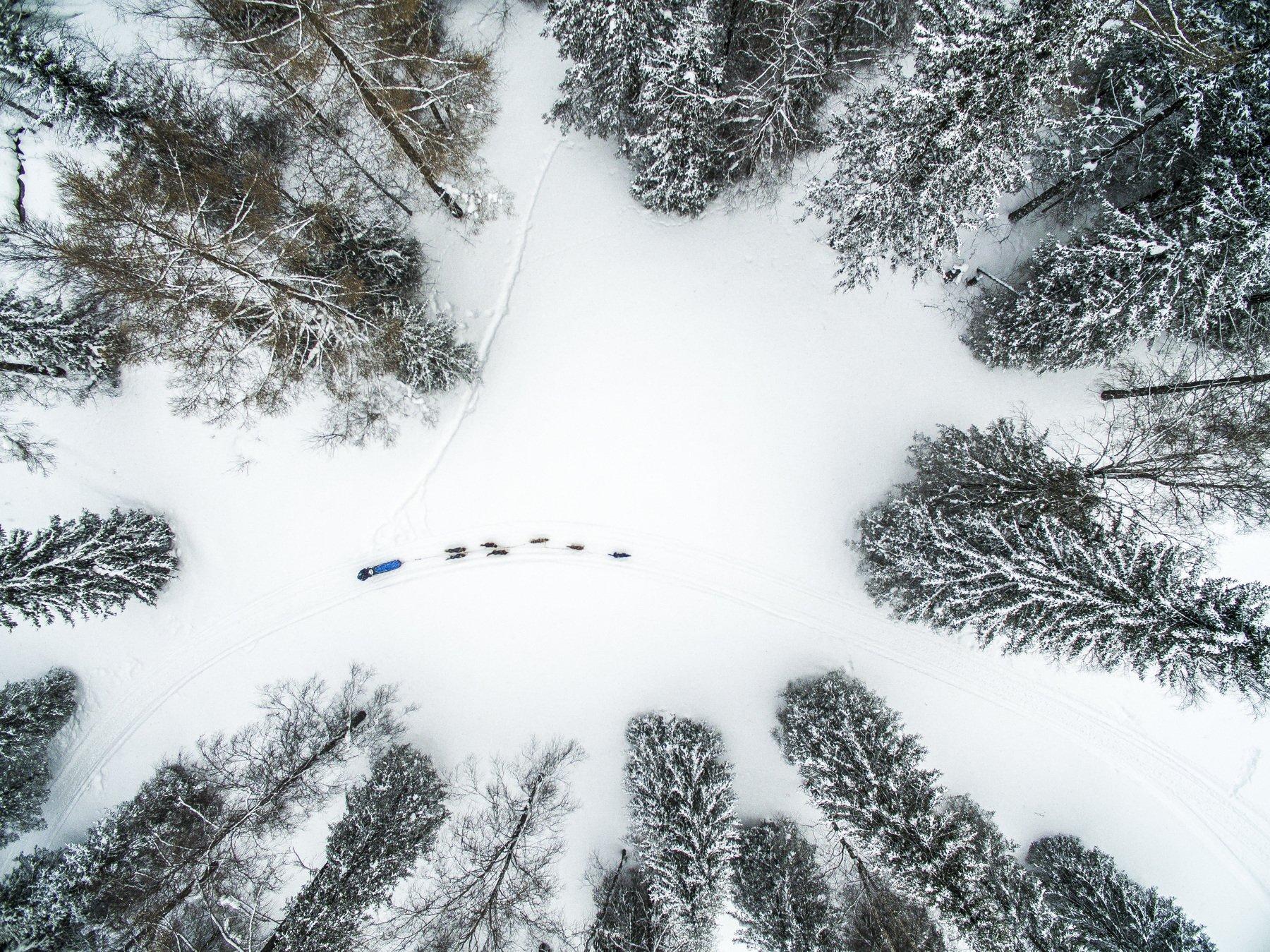 sled, dog, winter, snow, forest, Tarasov Maksim