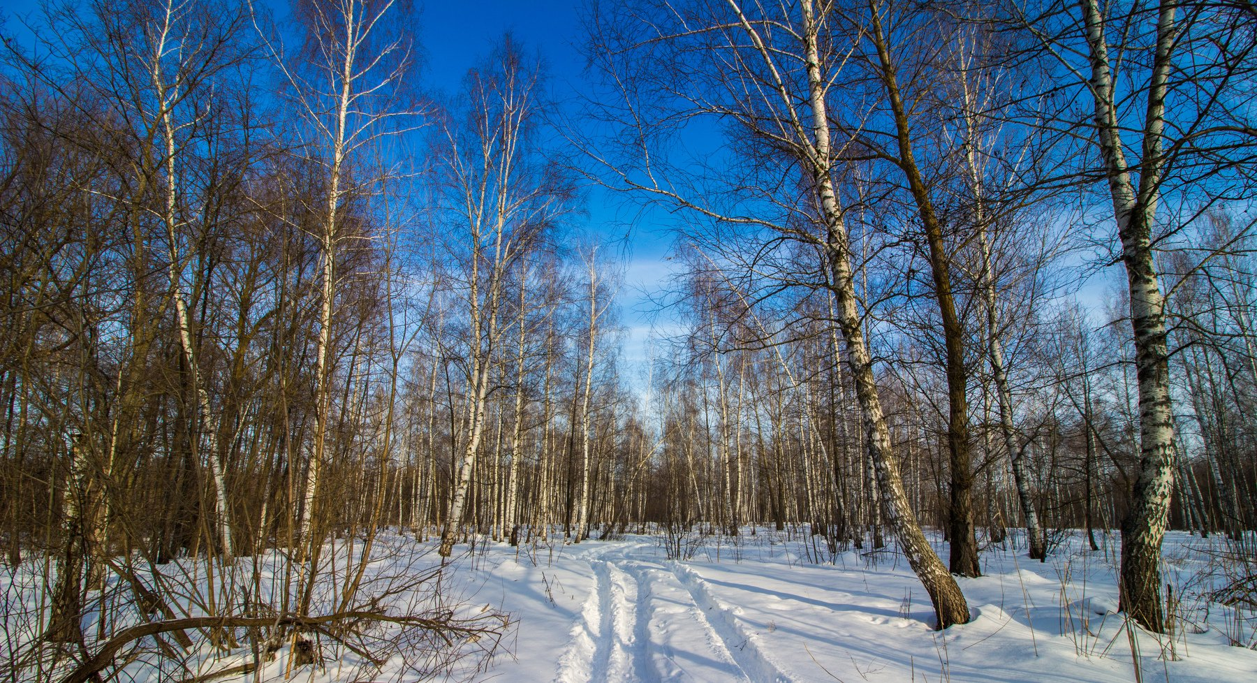 лес, зима, снег, берёзы, дорога, Руслан Востриков