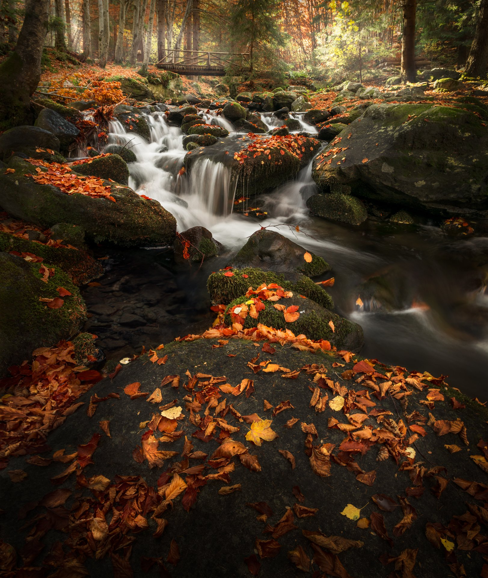 landscape nature scenery forest wood autumn river longexposure mountain rocks leaves bridge vitosha bulgaria лес oсень, Александров Александър
