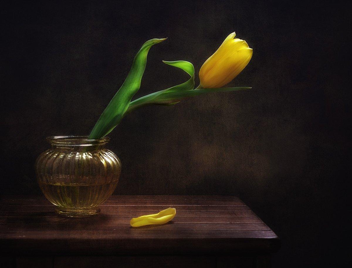 натюрморт,тюльпан,цветы, Наталия К