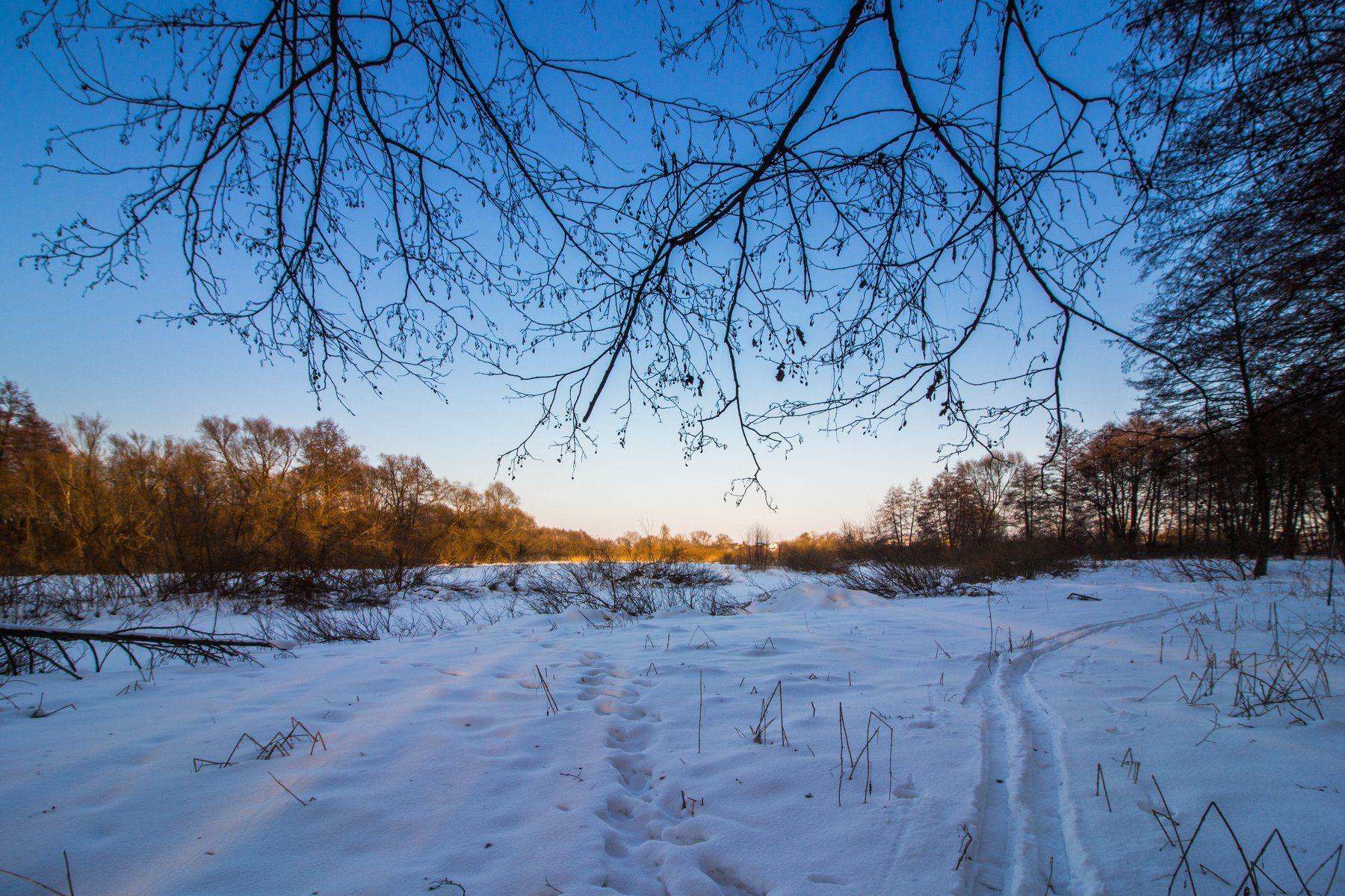 лес, снег, зима, лыжня, ольха, вечер, Руслан Востриков