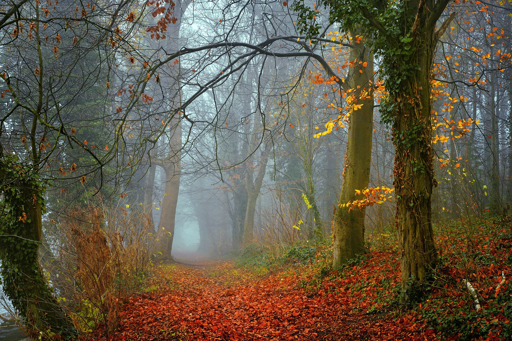 осенняя аллея autumn alley dranikowski path road mist magic trees foggy colours d610 fall, Radoslaw Dranikowski