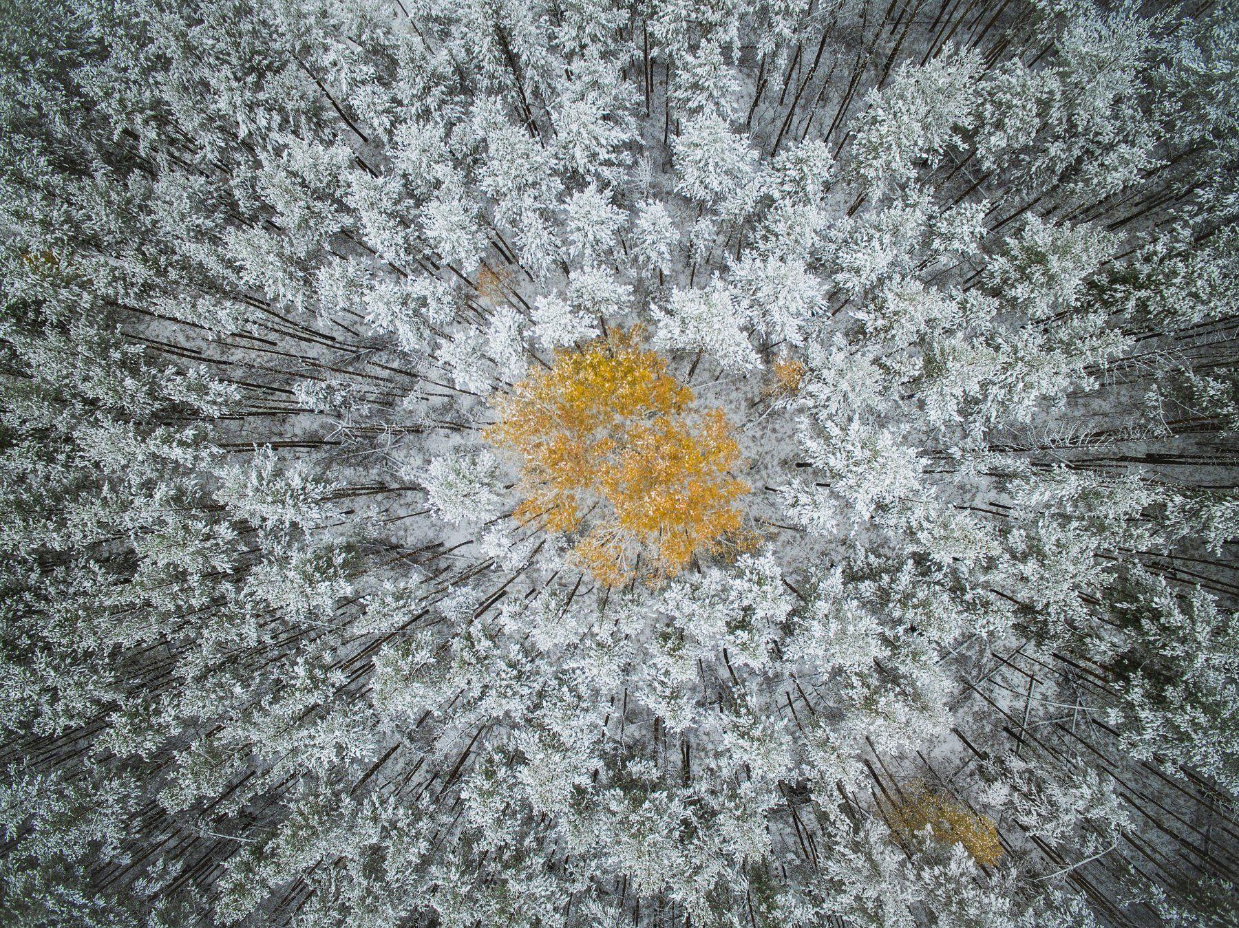 autumn, fall, tree, leaves, yellow, Tarasov Maksim